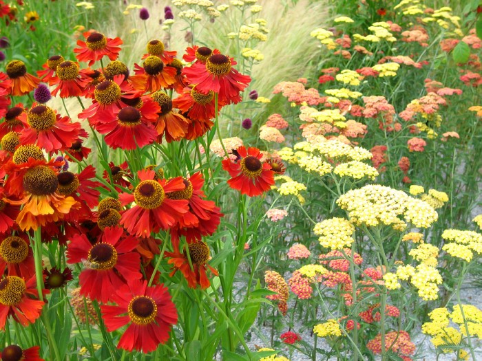 bigstock-Garden-Of-Flowers-1441744