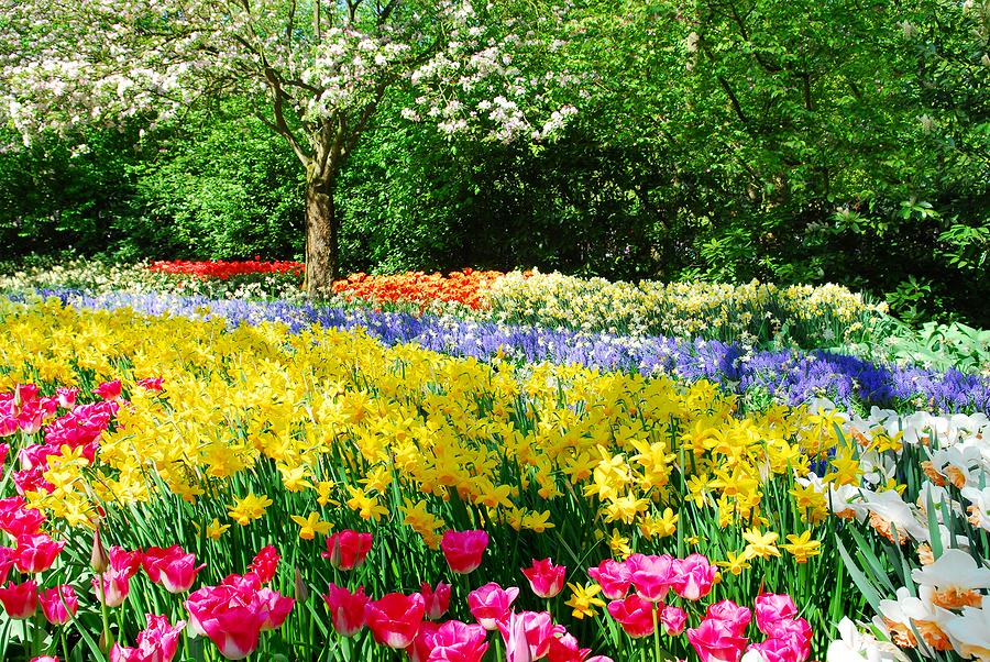 Organic gardening & Natural healing
